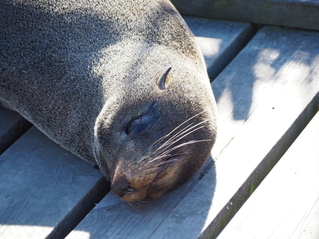 Lazy seal...