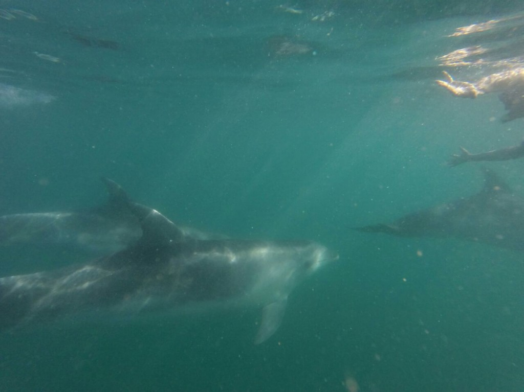 Swimming with wild dolphins at the Bay of Islands!