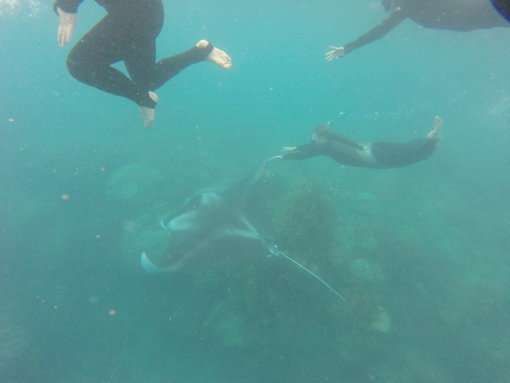 This GoPro picture does not do this moment justice! But hopefully shows off the sheer size of the manta rays (one of two)