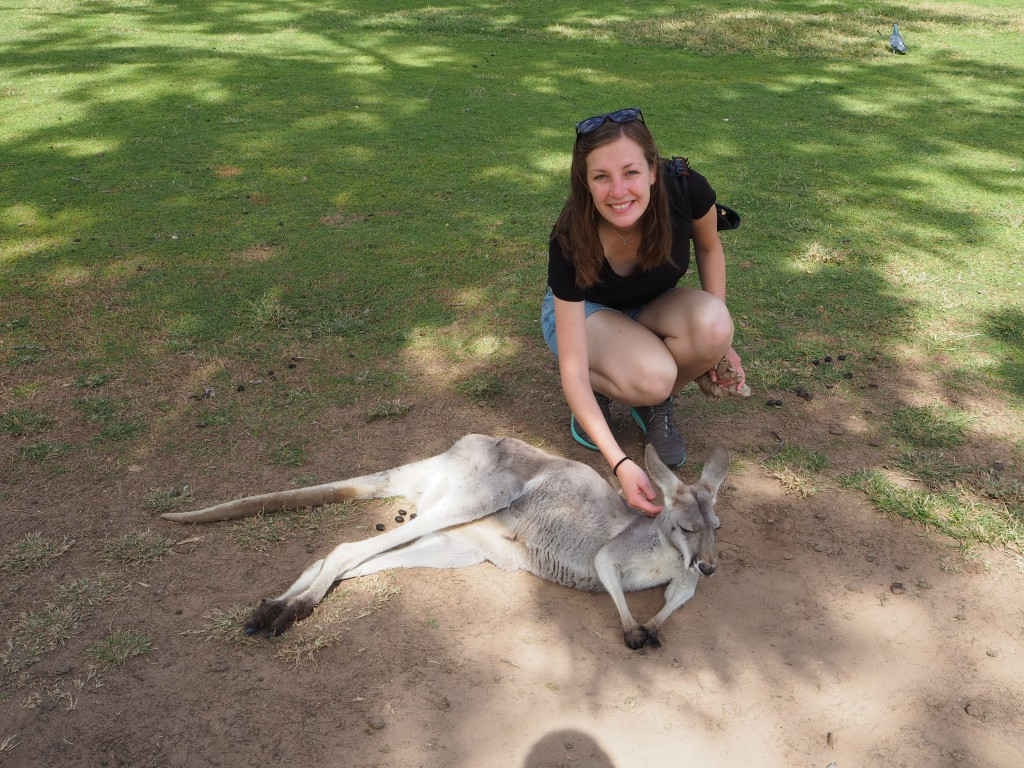 The kangaroos were pretty tame and enjoyed some attention (we hope) at Lone Pine