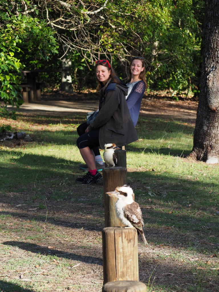 Some very sociable kookaburras hanging out with Hat and Tamsin