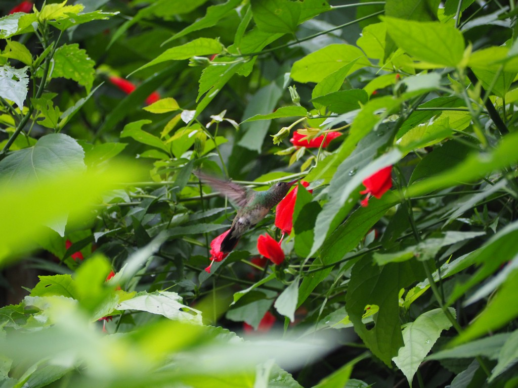 ...apart from spotting loads of hummingbirds (and finally managing to take a picture of them!)