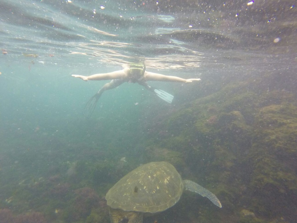 The sea turtles at Los Tunneles were HUGE, much bigger than the ones we saw in Australia