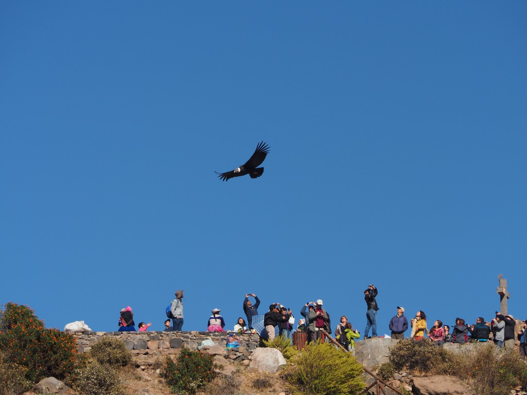 A condor flies over mostly-unready onlookers at Cruz del Condor