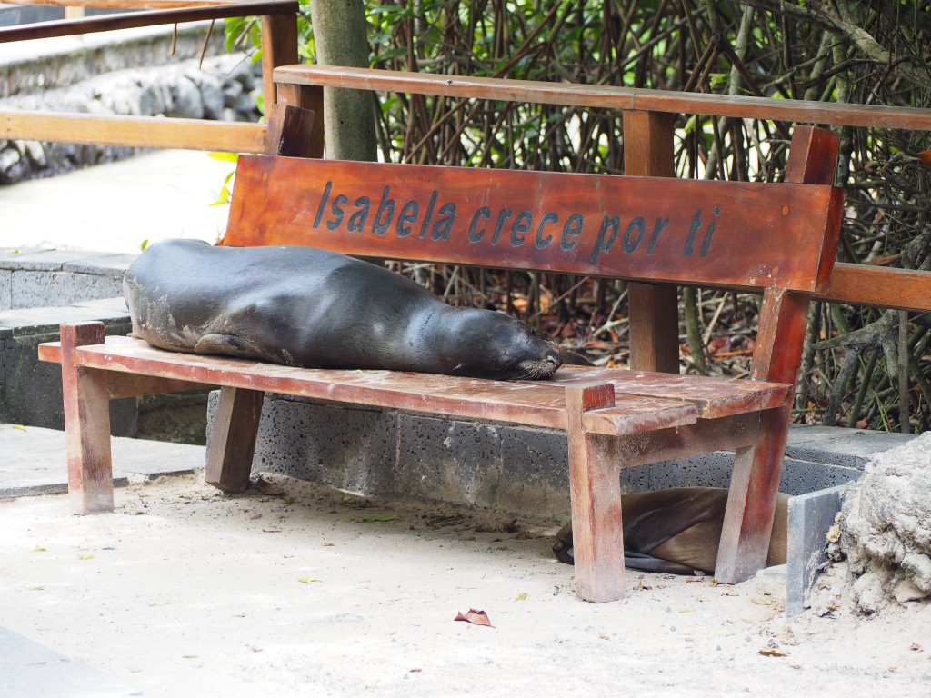 Sea lions especially loved sleeping on benches