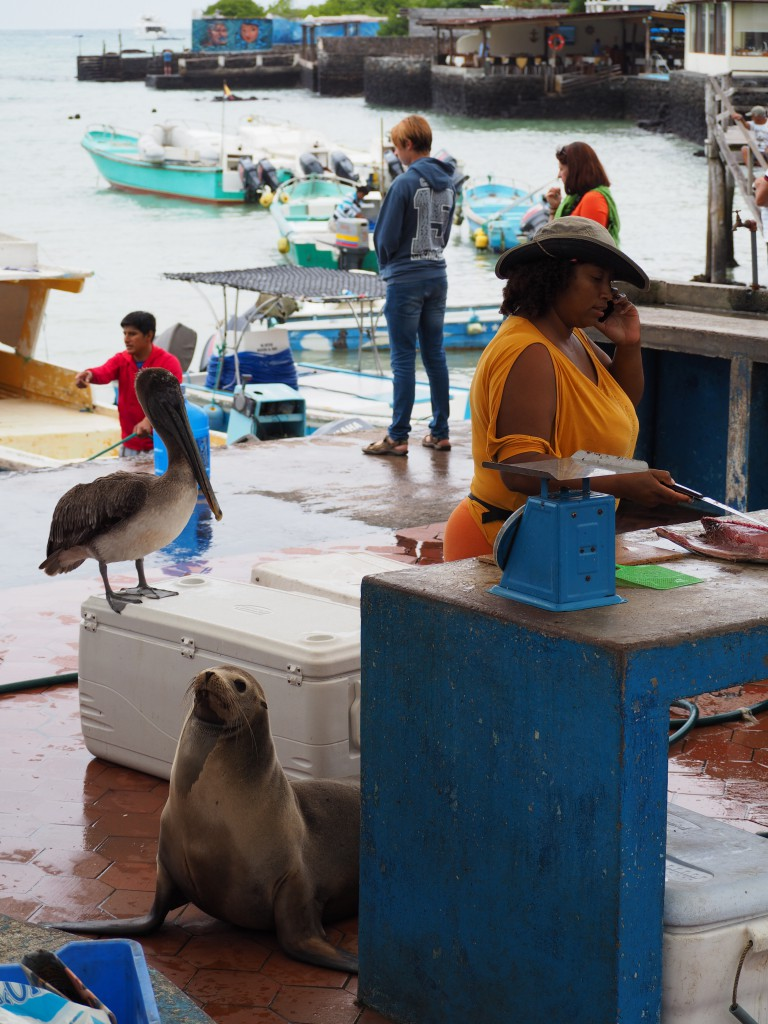 A pelican and a sea lion eagerly wait for a chance to grab the fish at the fish market