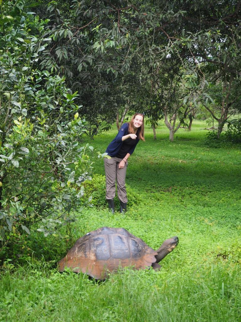 Tortoise spotting