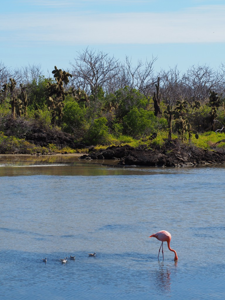 A chance to see more flamingos at Dragon Hill