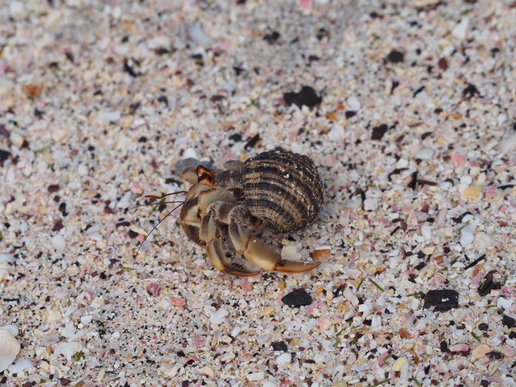 Hermit crabs everywhere! Look how big and cute their eyes are!
