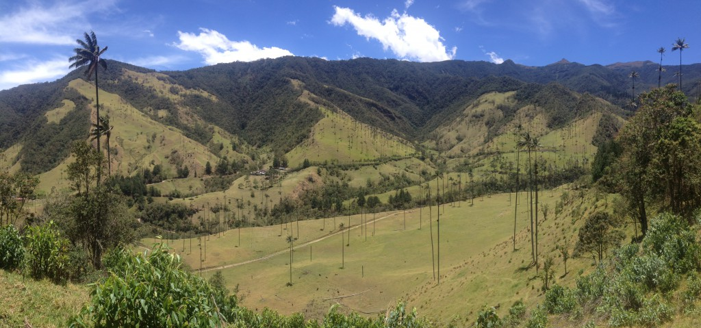 Our trek to the Valle de Cocora was full of views like these, with the wax palm trees in the distance