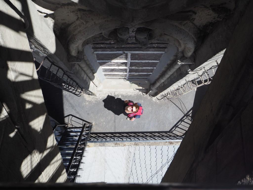 Hatters spotting at the Basilica del Voto Nacional in Quito