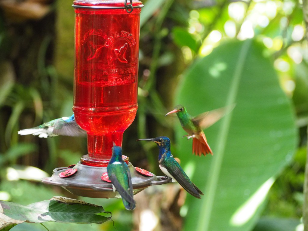 There were loads of different types of hummingbirds flying around us, drawn to the feeders