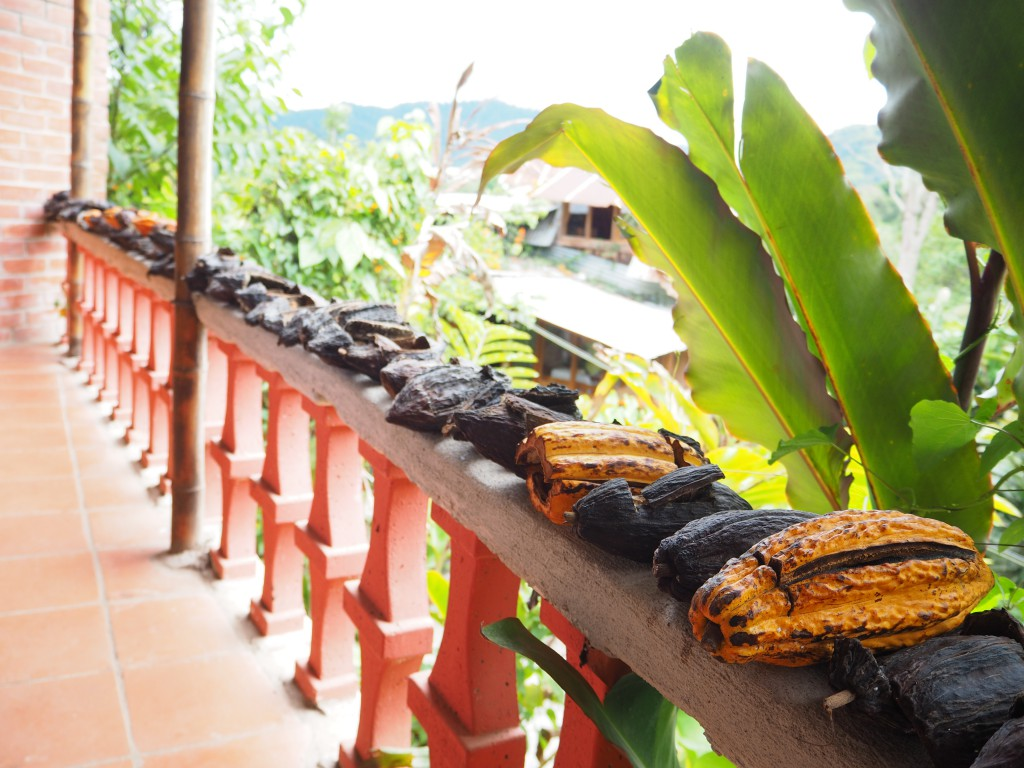 Cocoa beans lined up at El Quetzal, the chocolate museum in Mindo