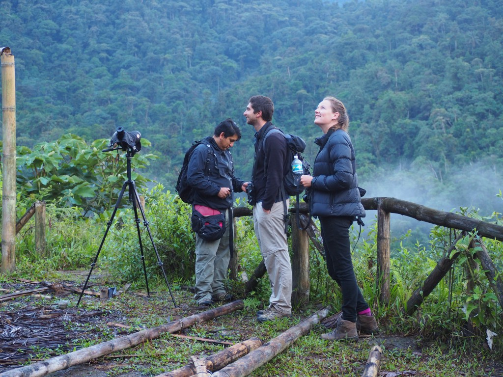 Birdwatching in the Mindo cloud forest