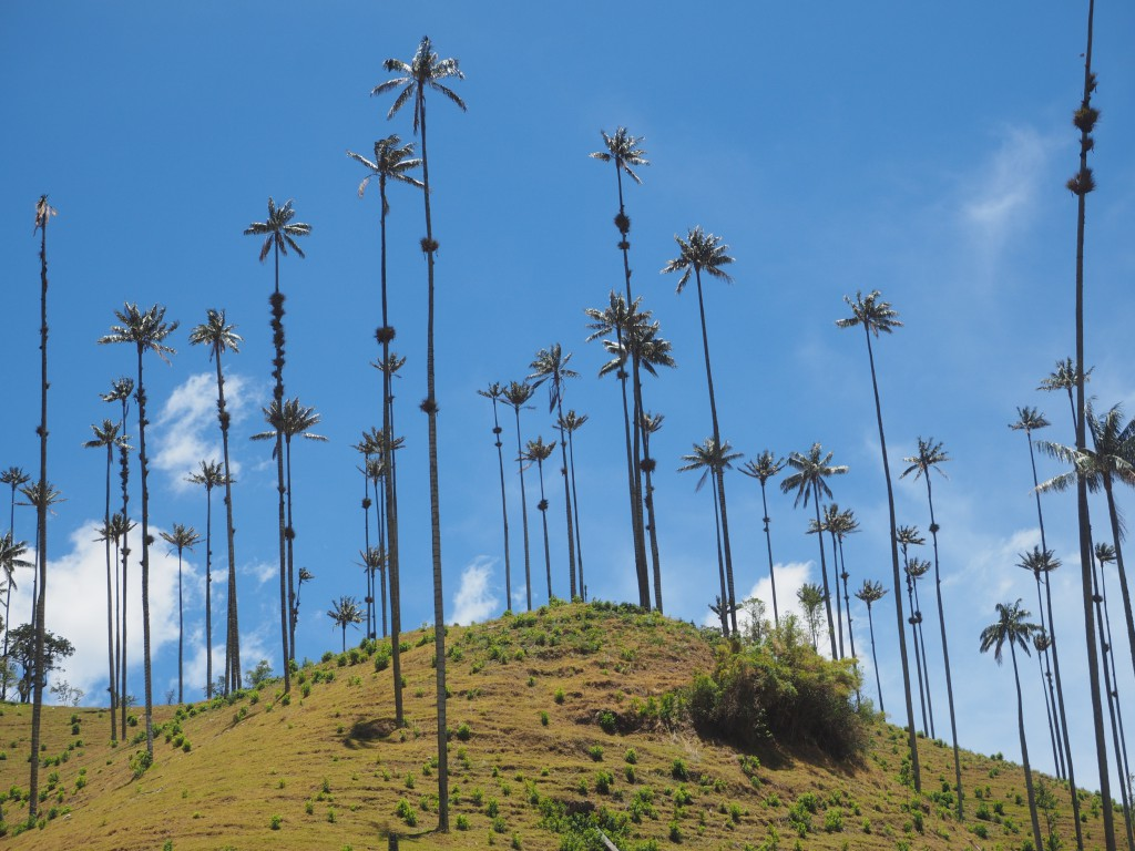 The tall wax palms were hard to take pictures of, especially with any of us in the frame
