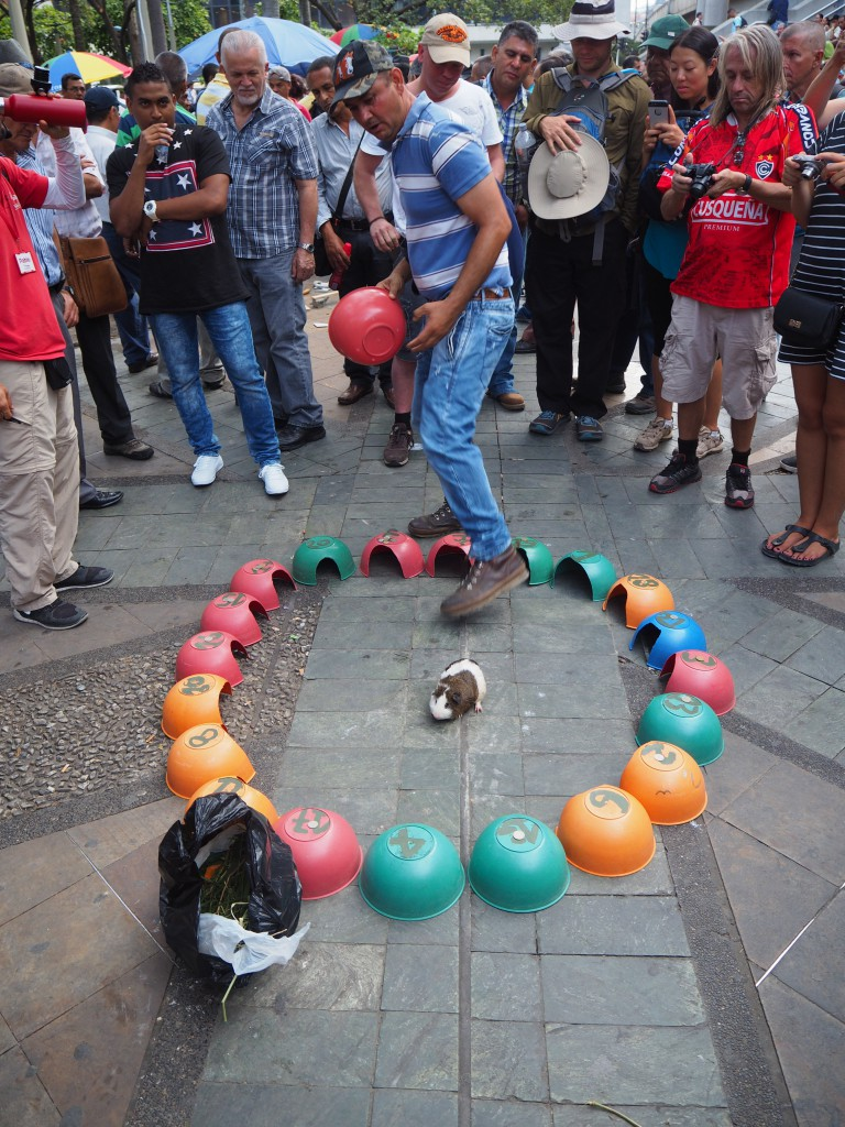 Gambling in Medellin - put your money on which box the guinea pig will go to