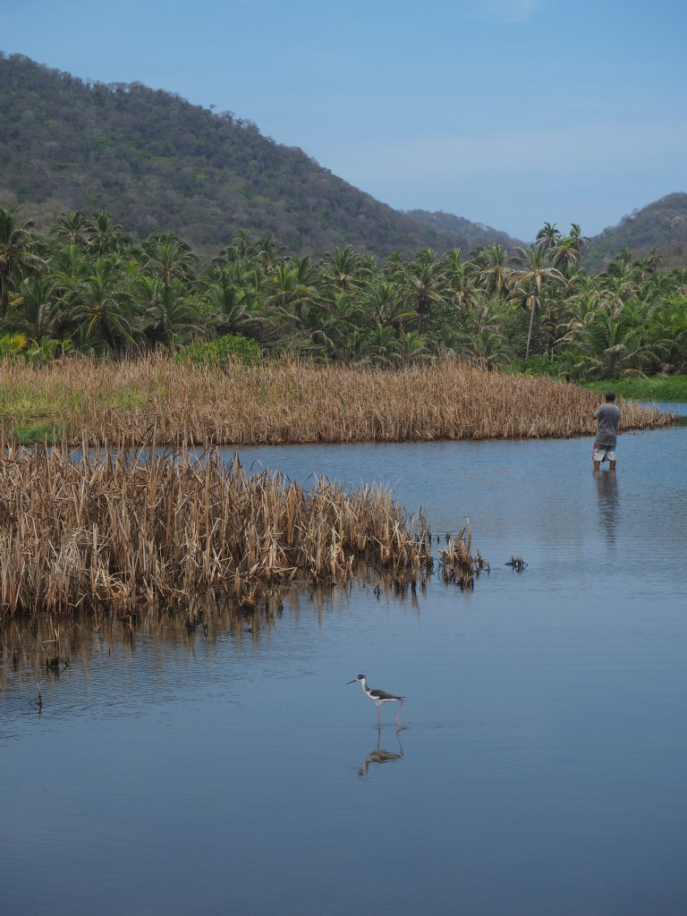 A local man fishing with a net while a heron-like bird does his own fishing behind him