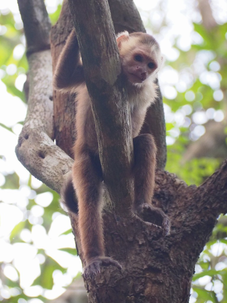 On the return leg of the trek we noticed a few monkeys were watching overhead